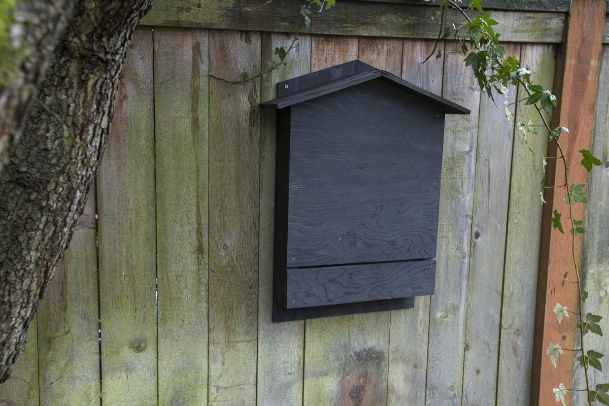 Bat-Box-Chamber